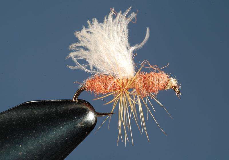 Flying-Cinnamon-Ant