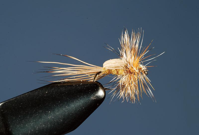 Joe-Humphreys-Flying-Beetle fly