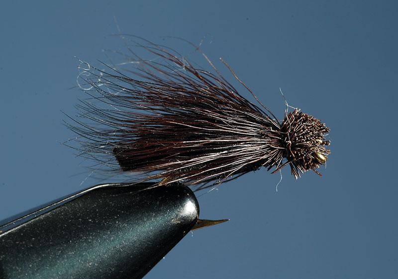LeTort-Cricket fly