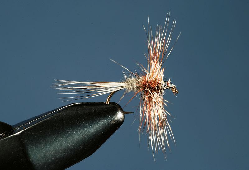 Wingless-Adams-fly