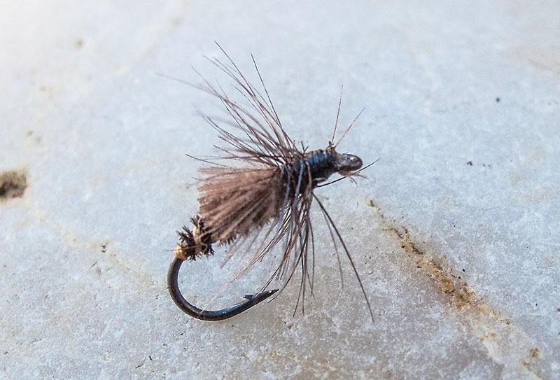 Culard-Sedge fly