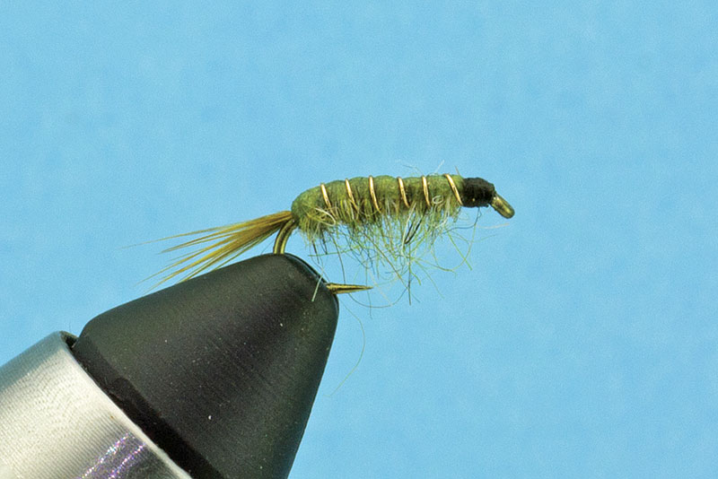 Olive-Scud-fly