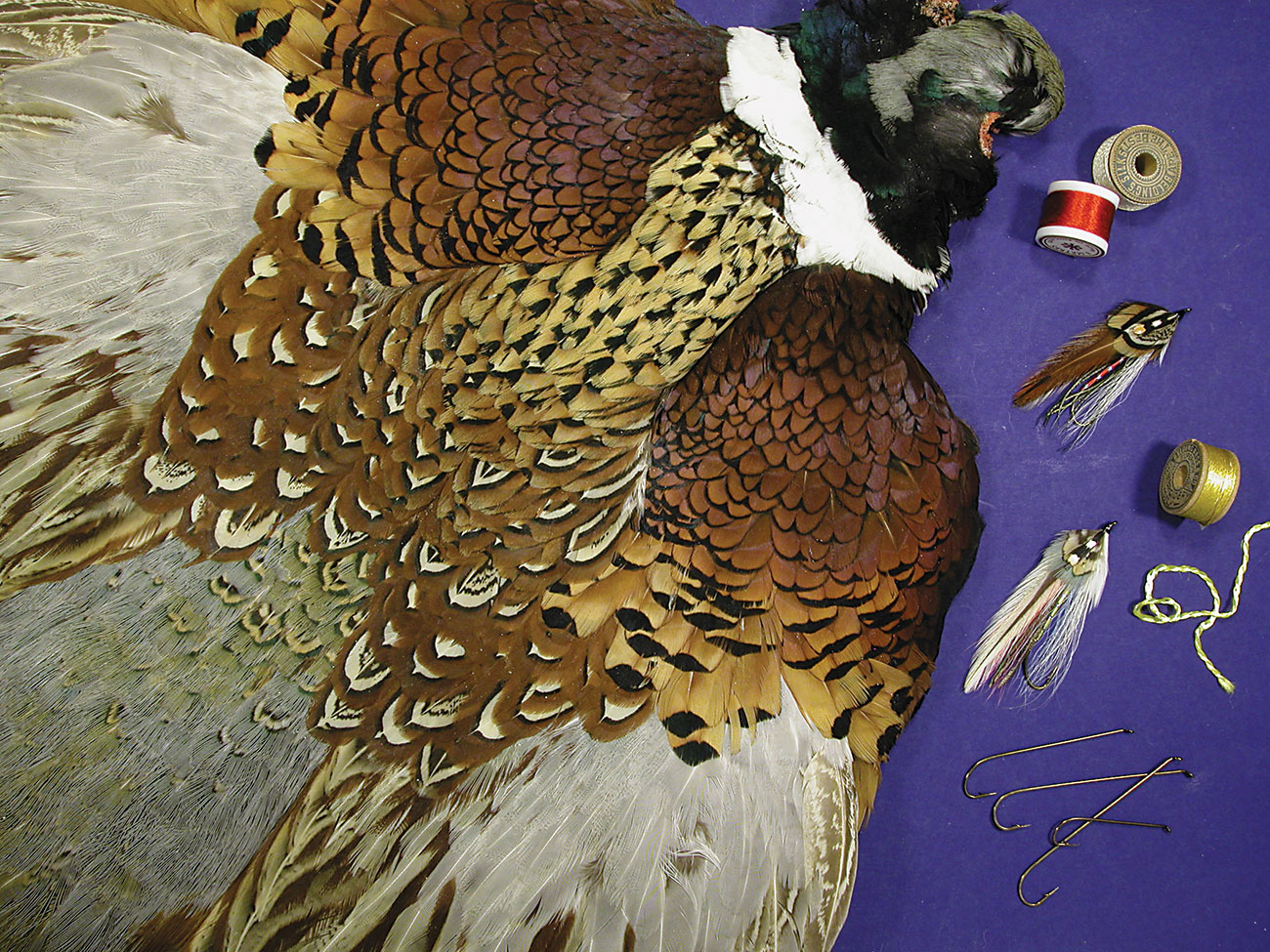 A common ring-necked pheasant skin contains hundreds of feathers suitable for tying heritage featherwing streamers.