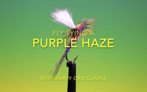 Purple Haze fly