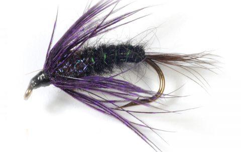 carp fly